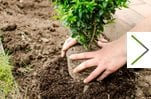 c_plant_a_tree