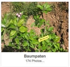 Baumpaten1